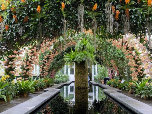 The Orchid Show 2020