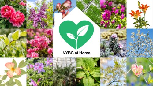 NYBG: Online Adult Education Classes