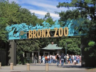The Bronx Zoo Reopens